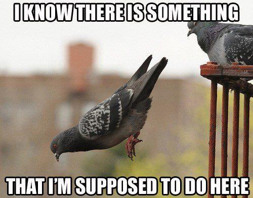 Funny Animal Memes : Funny animal memes.. part 1 the giffgaff community